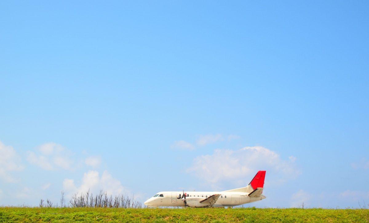 飛行機がいる!