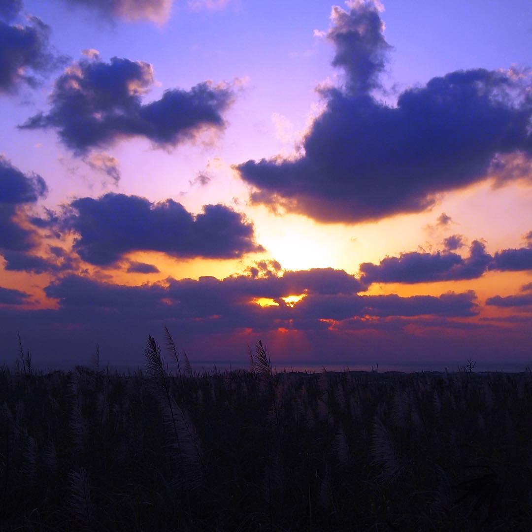 さとうきび畑と夕焼け