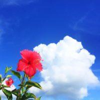 ハイビスカスと雲と青空