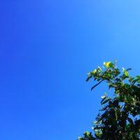 今日はよい天気で、昼間外にいたら暑かったですよ