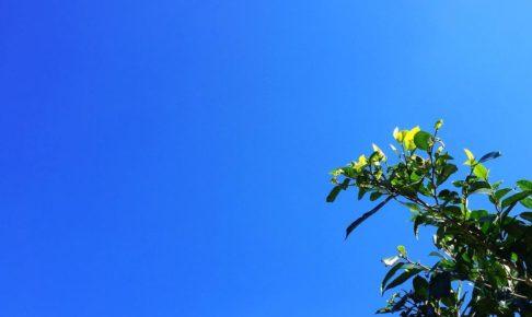 今日はよい天気で、昼間外にいたら暑かったですよ。