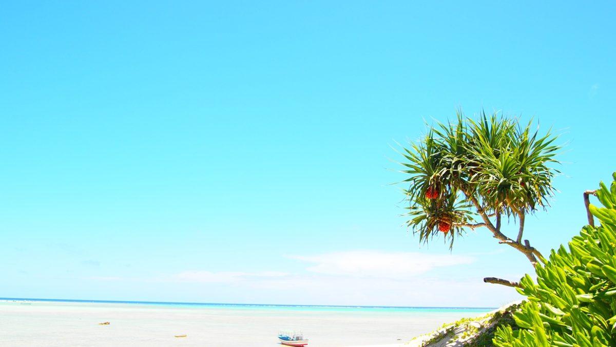 オーガニック海岸
