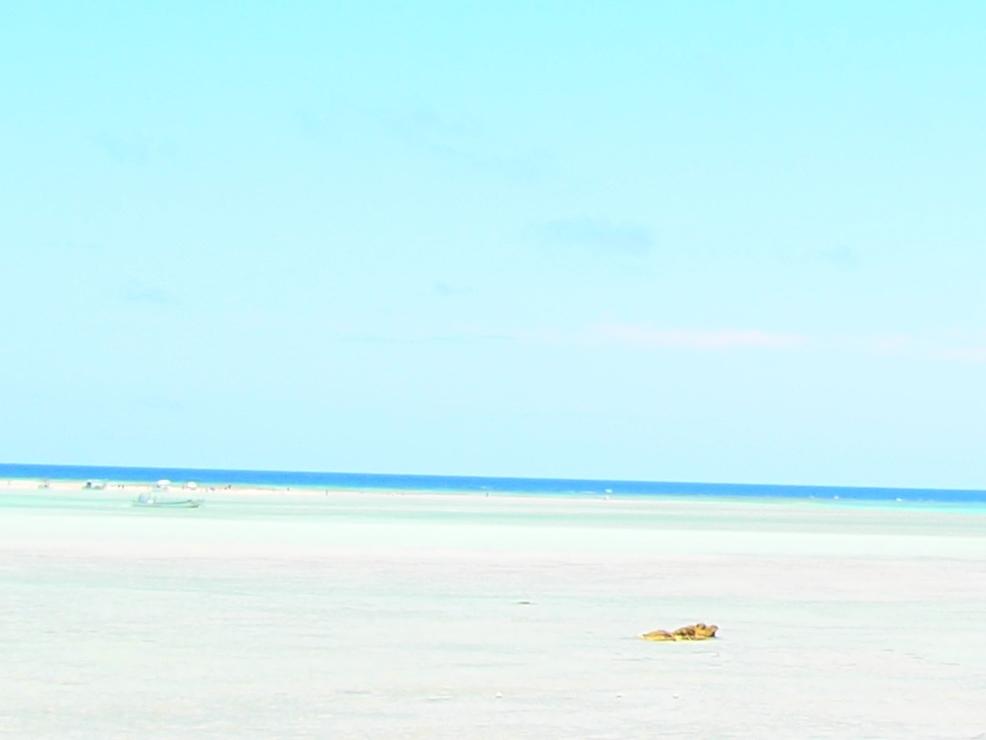 百合ヶ浜が見えます
